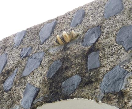 碑の屋根部は、飢えと渇きに苦しんだ兵士たちへの慰霊として雨水が貯まるようになっている。