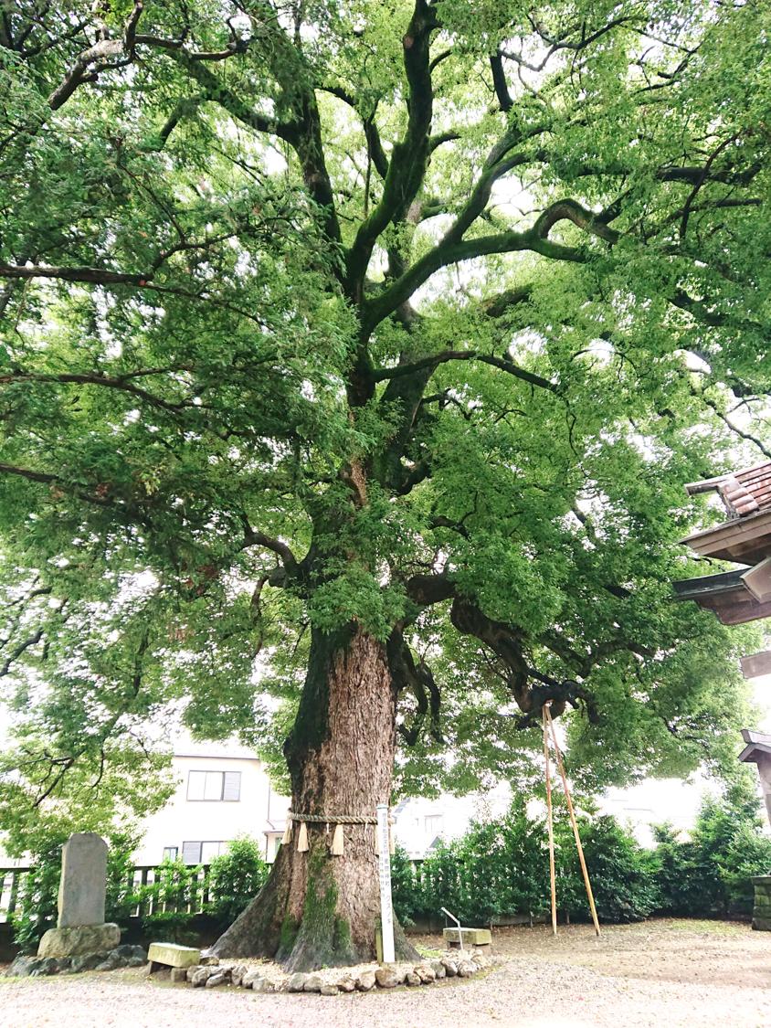 2020年7月26日(日)金鑚神社(本庄市)にて中村民夫先生の天井画をみさせていただきました。
