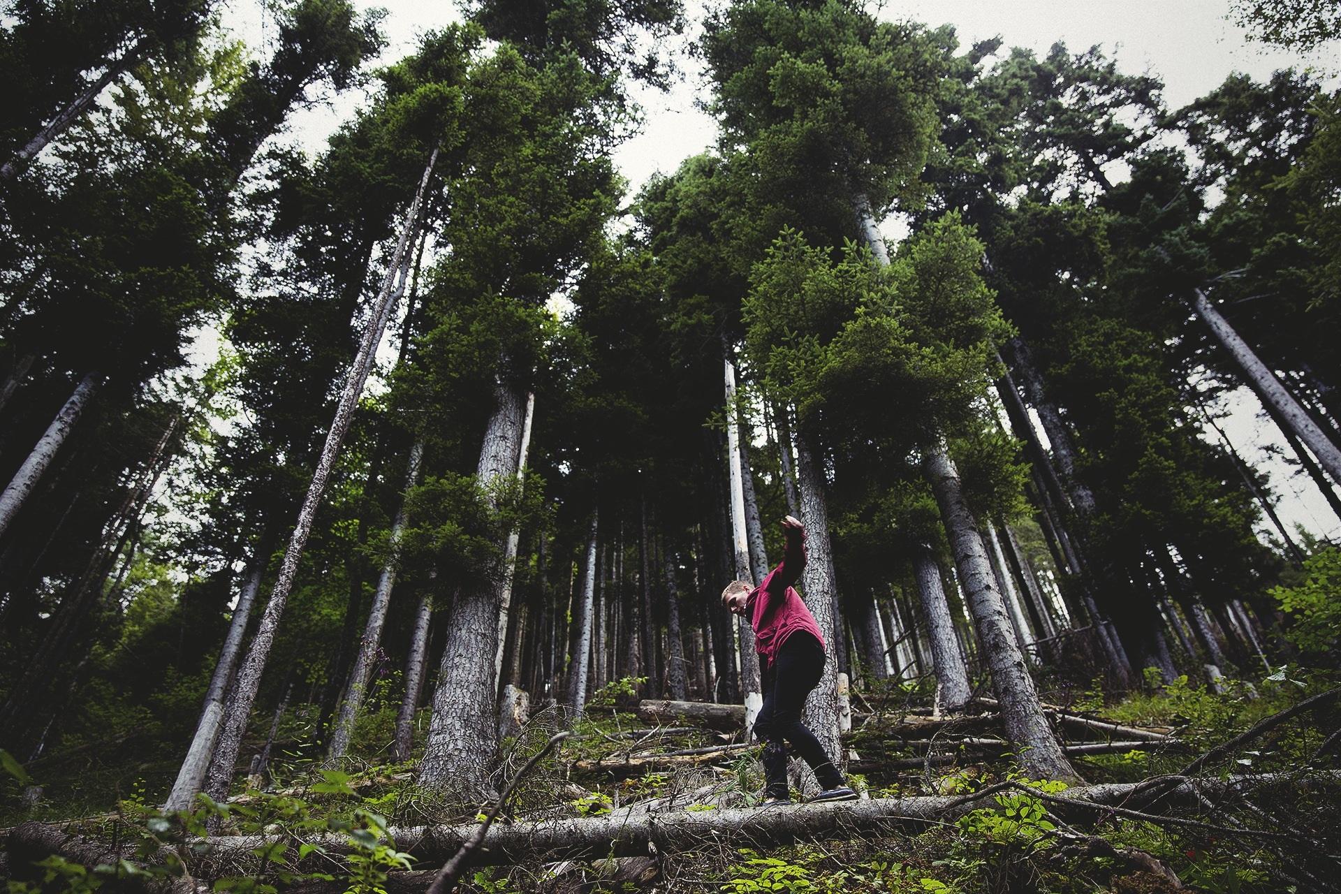 Balanceakt im Wald