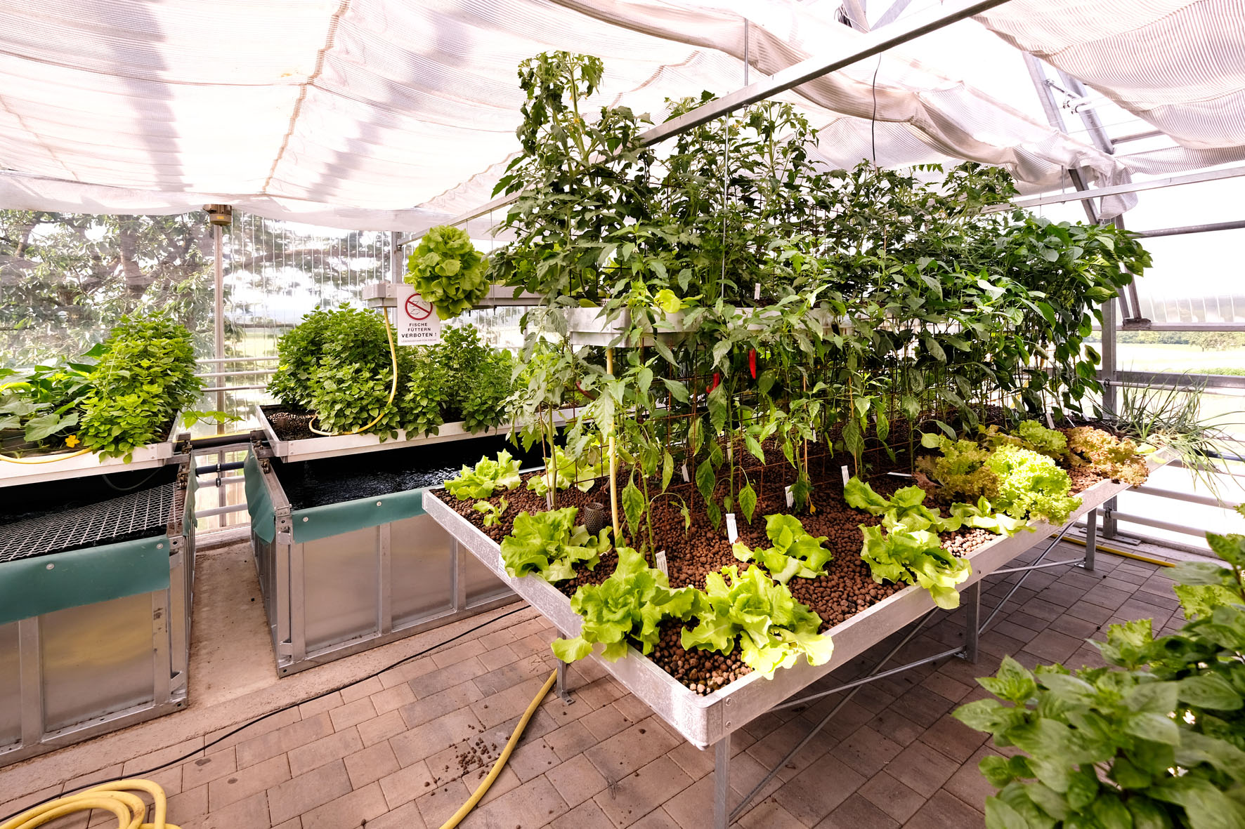 Aufzucht Gemüse