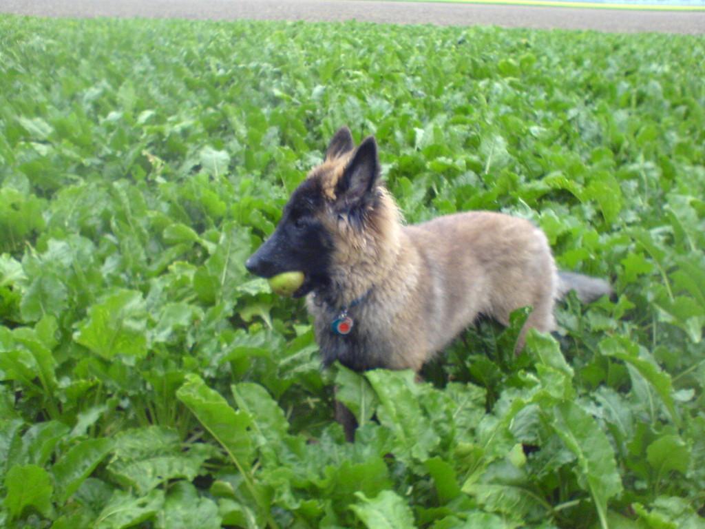 Bei Regen im Feld