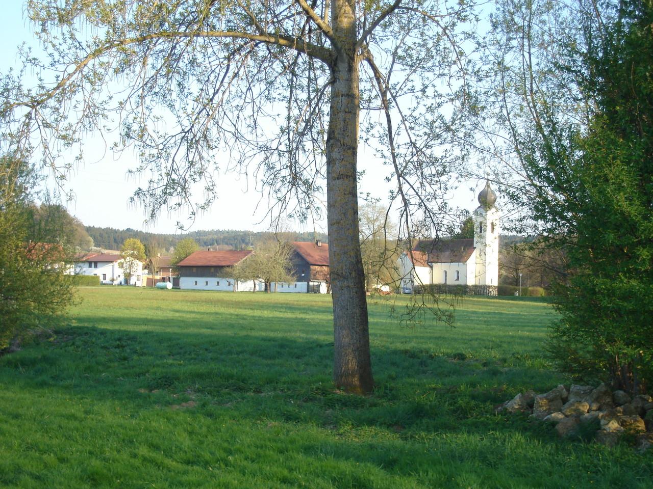Lengsham im Frühling