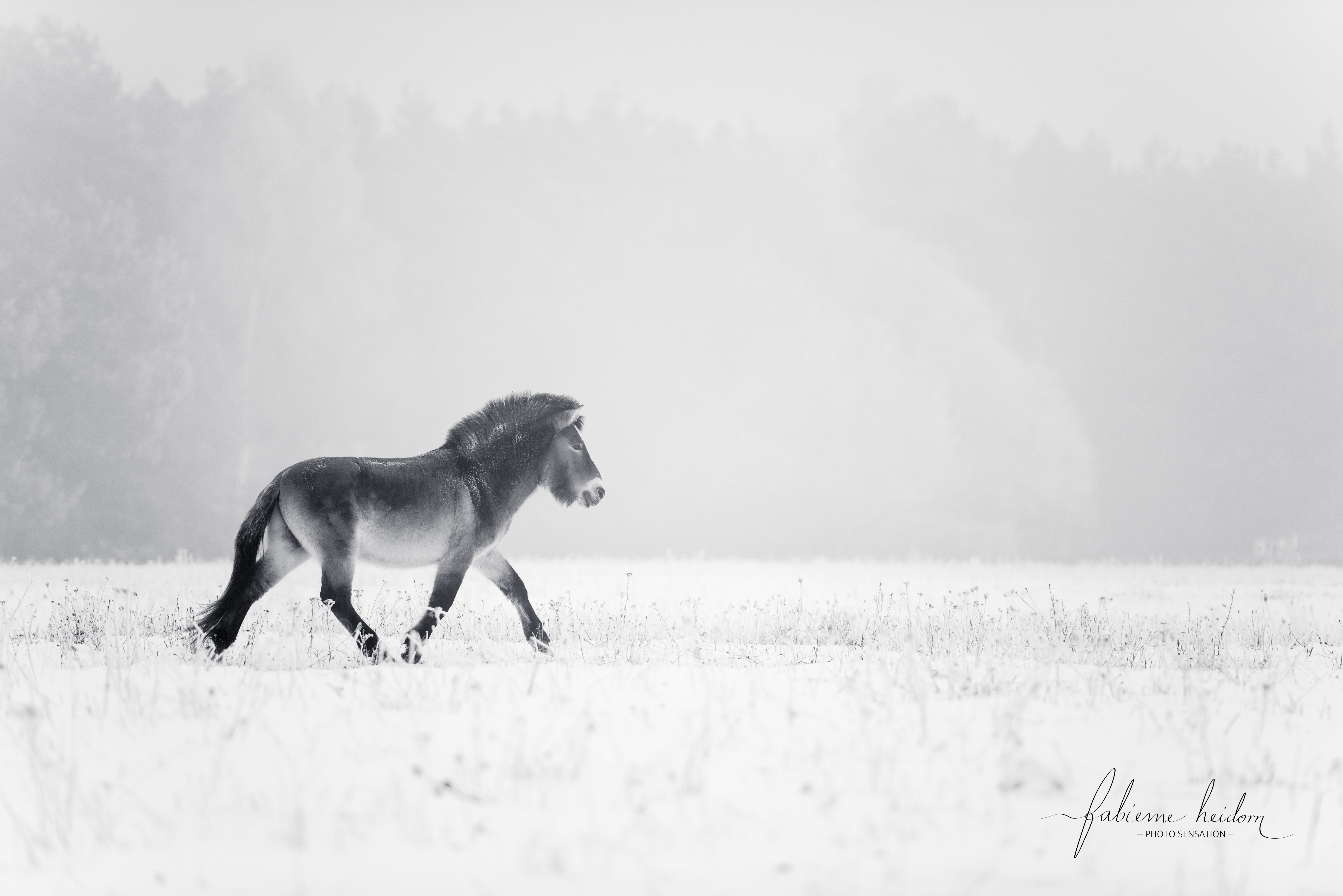 Hengst-Pferd-Fotografie-Coaching