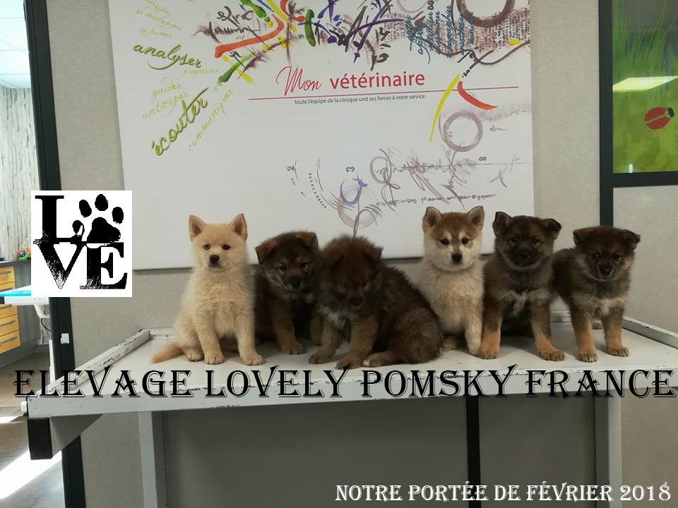 ELEVAGE LOVELY POMSKY FRANCE