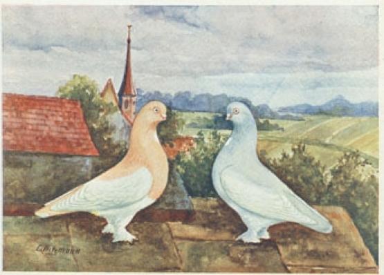 Berliner Kurze - Porträt