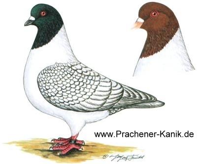 Werner Geistmann - Mährische Strasser