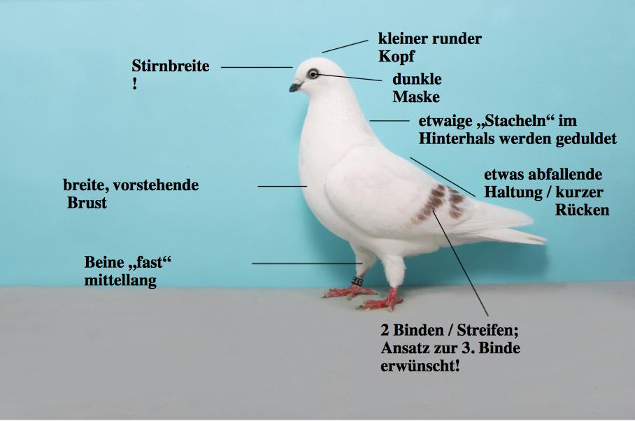 Schöneberger Streifige