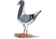 Konrad Prechtl - Huhnschecken