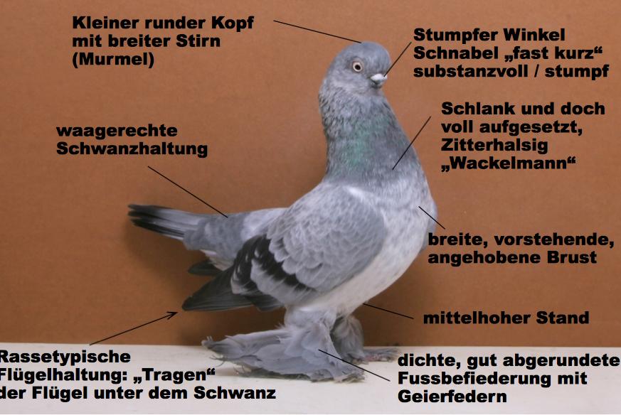 Berliner Kurze
