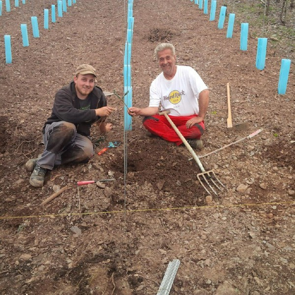 Neuanpflanzung Saar-Riesling im Volz junior