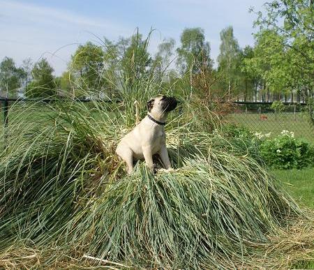 het was een stout hondje :-)
