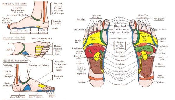 Cartographie des pieds en réflexologie plantaire