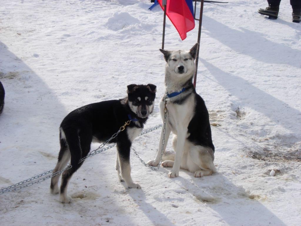 Skeena mit Puppy Merkur 2004