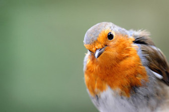 Birds & Nature