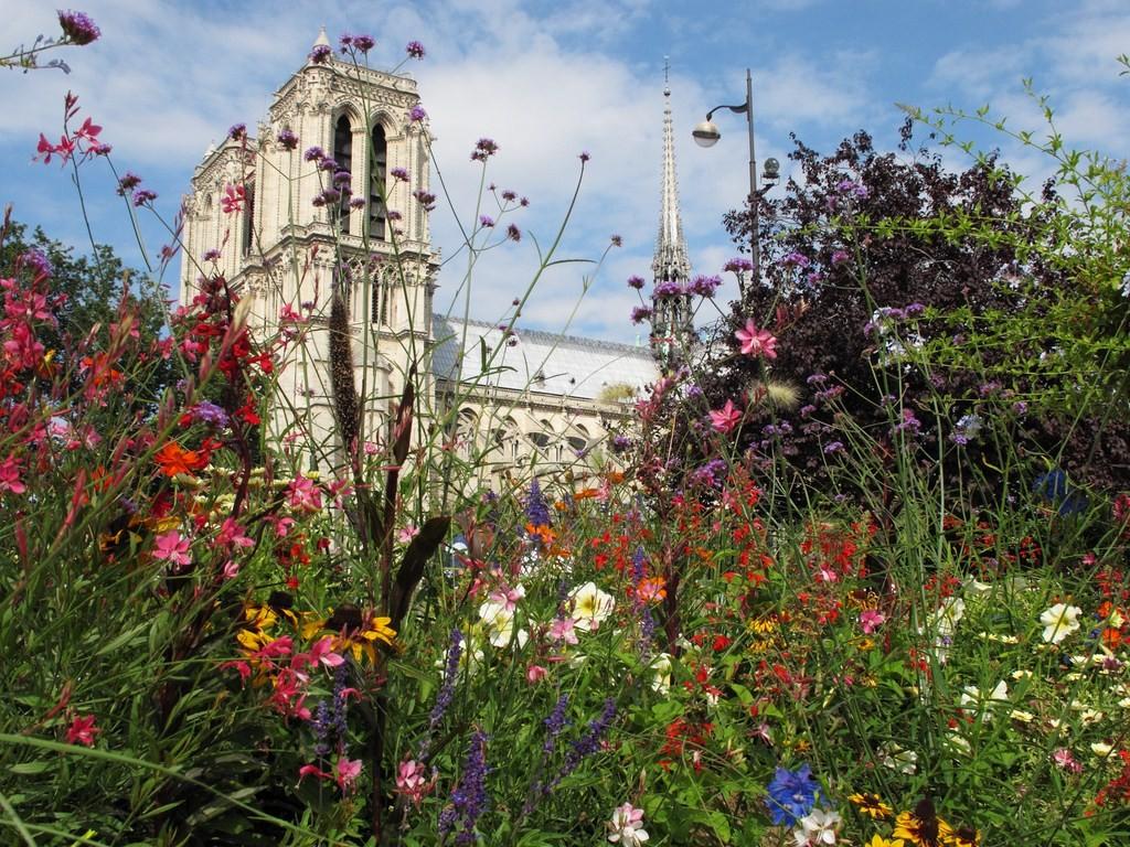 Didier : le printemps de Notre Dame