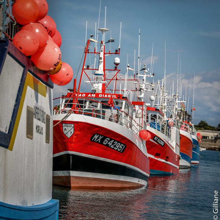 Roscoff : bateaux de pêches