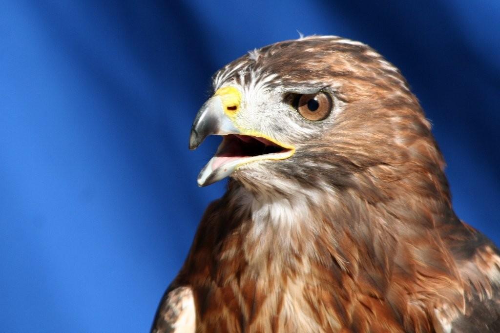 l'Aigle