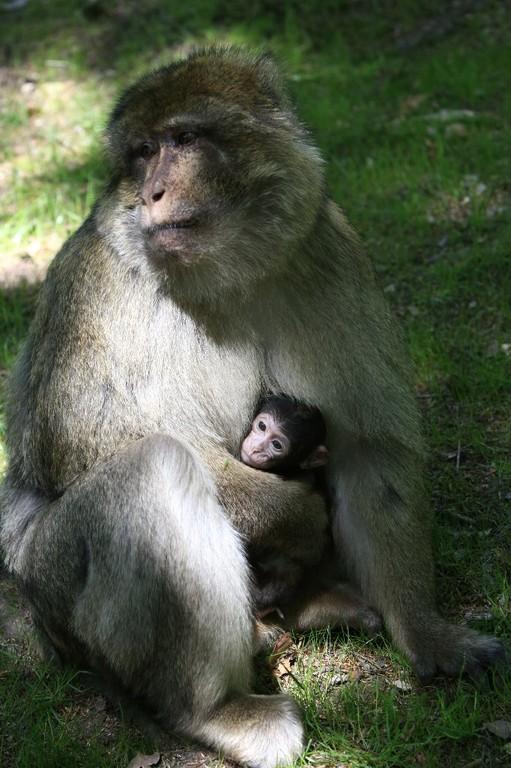Bébé couvé par maman (Patrick)