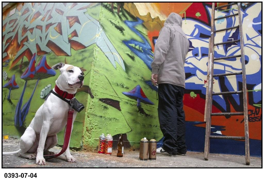 Alex : Le chien tageur