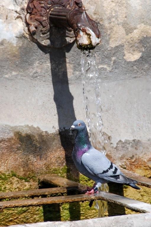 Didier : Pigeon