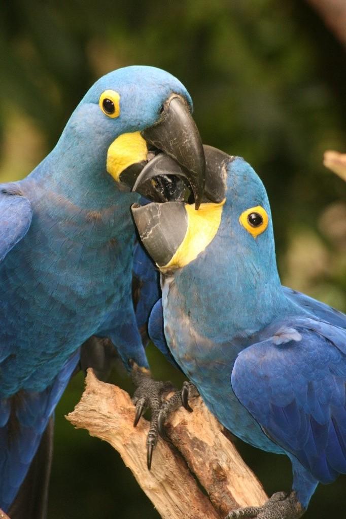Perroquets bec à bec