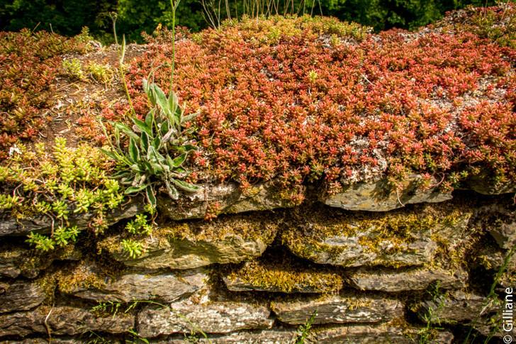 Murs en fleurs