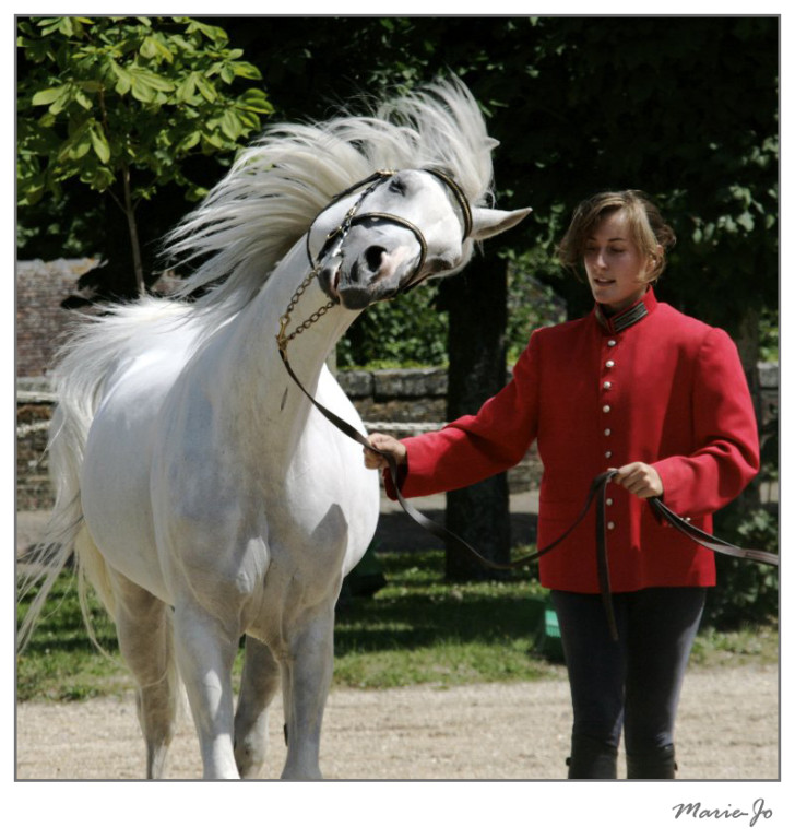 Tête de cheval tourbillonante