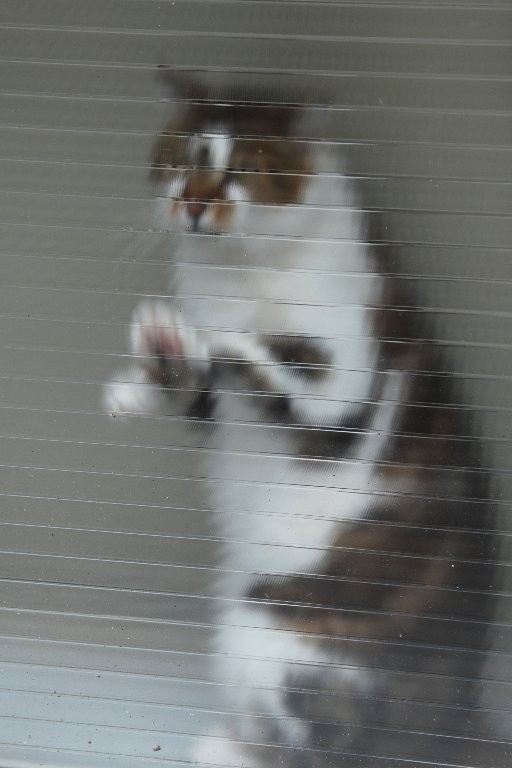 Didier : Pauvre chat