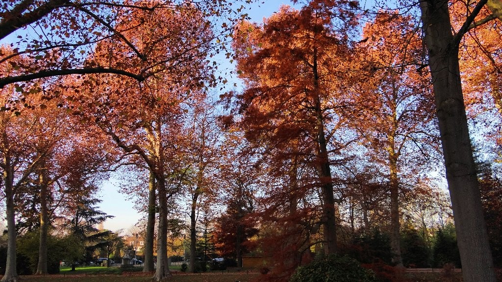 Parc de Poissy en automne (Annie)