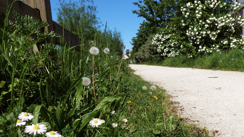 Petit chemin - Michel - Ballade buccolique