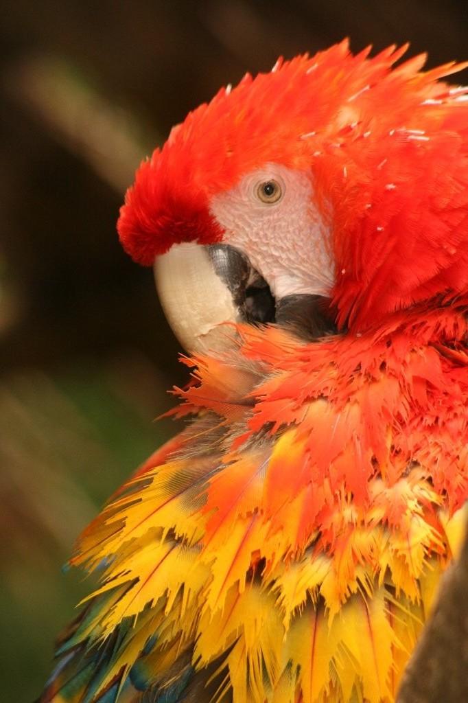 Le perroquet et son plumage