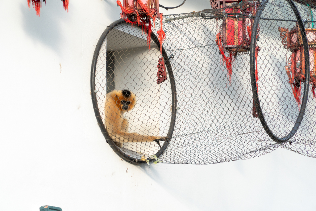 En cage - Gilliane