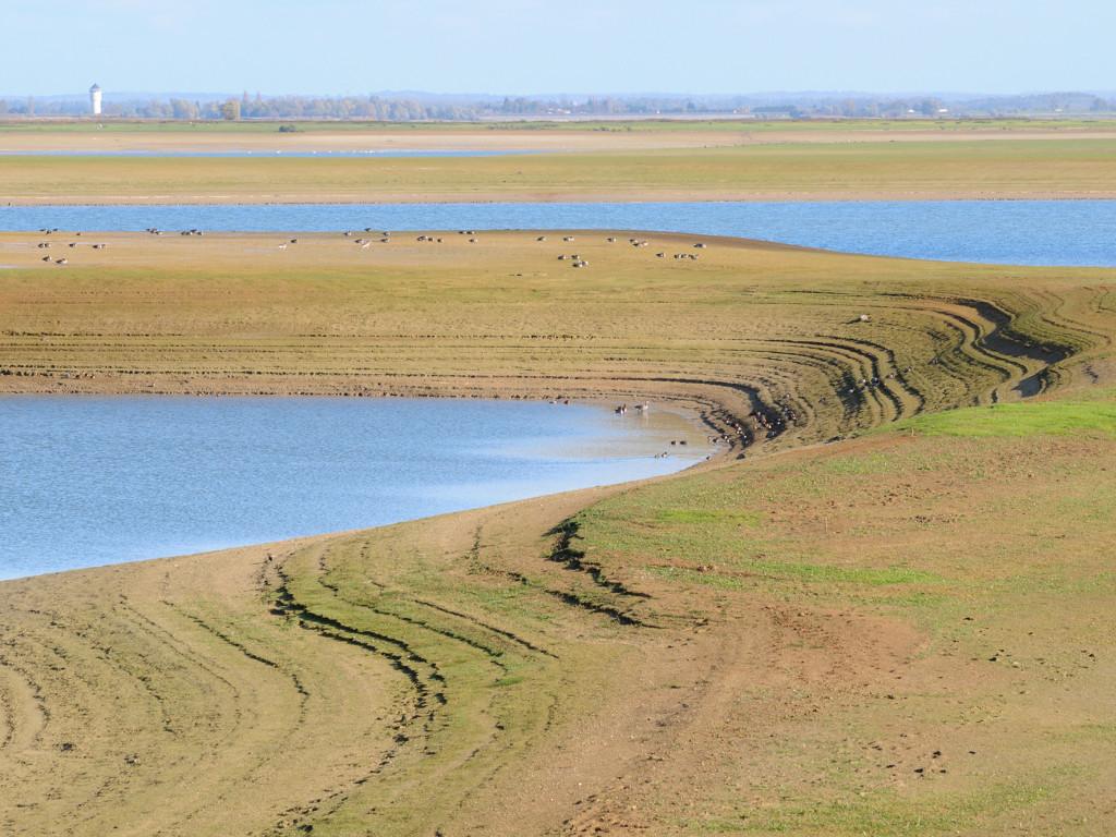 lac de Der - photo proposée par Didier M.