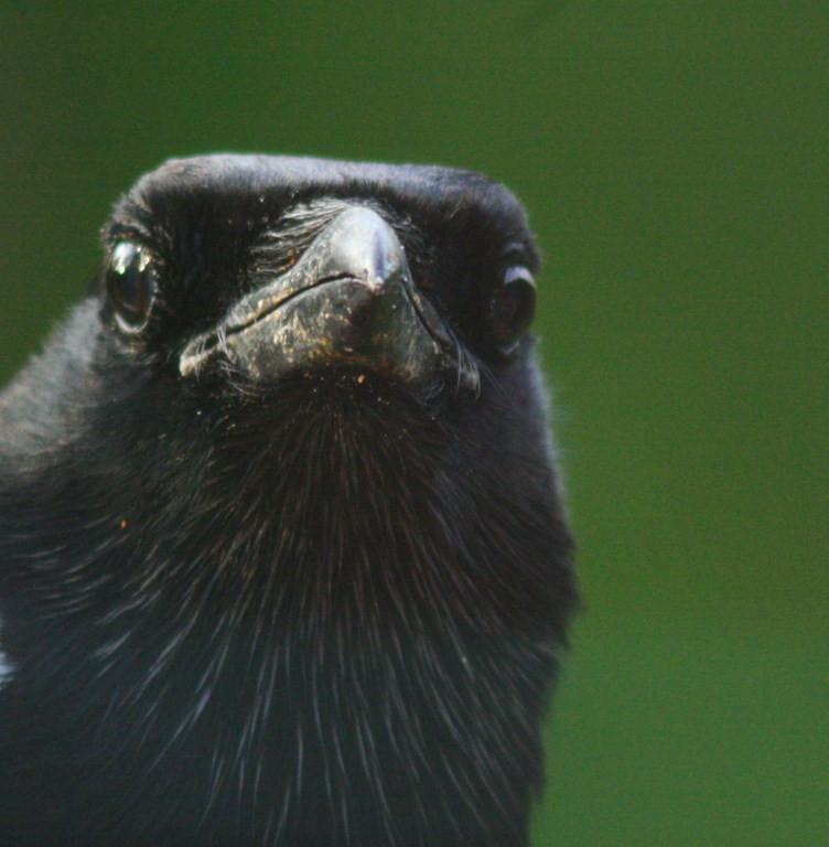 Pascale : Portrait d'oiseau 2