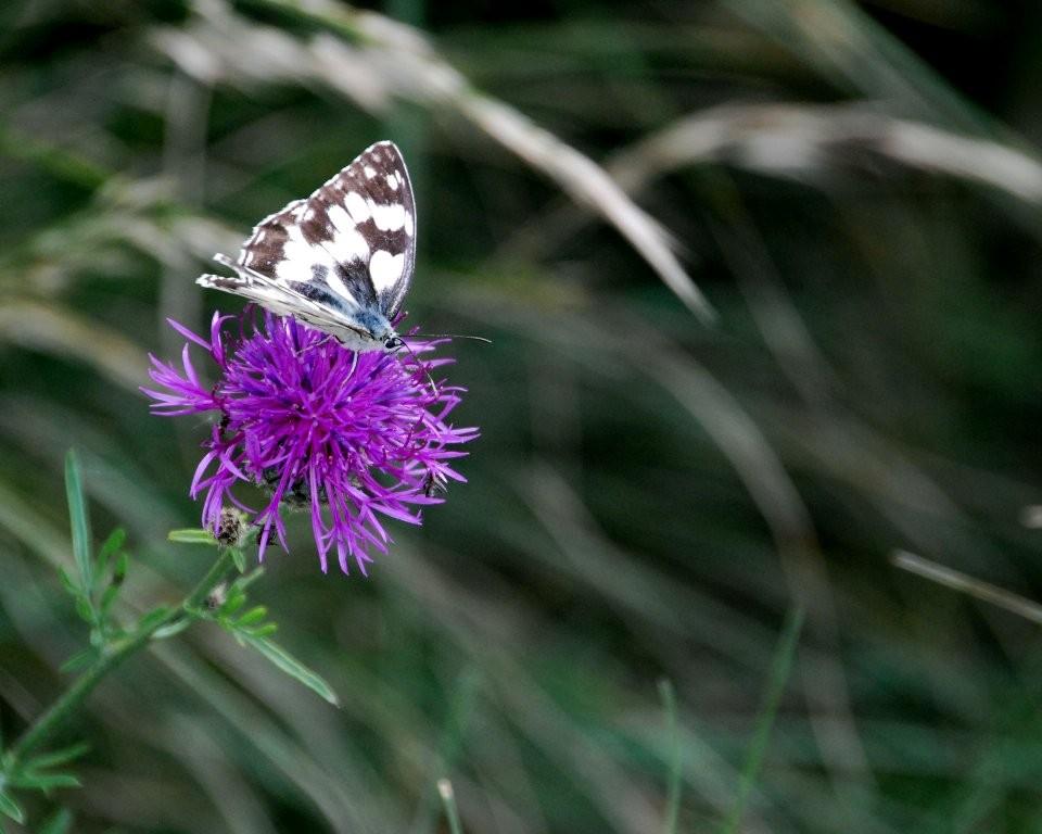 Papillon dans le vent (Marie Claude)