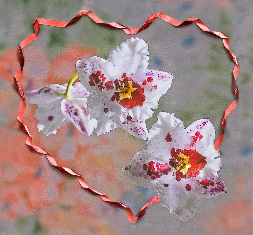 André Des fleurs en plein coeur