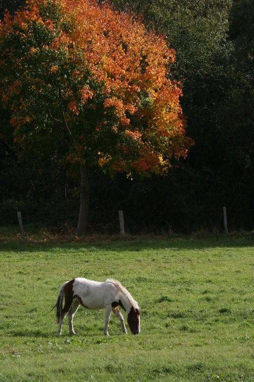 Pascale : Cheval dans la prairie