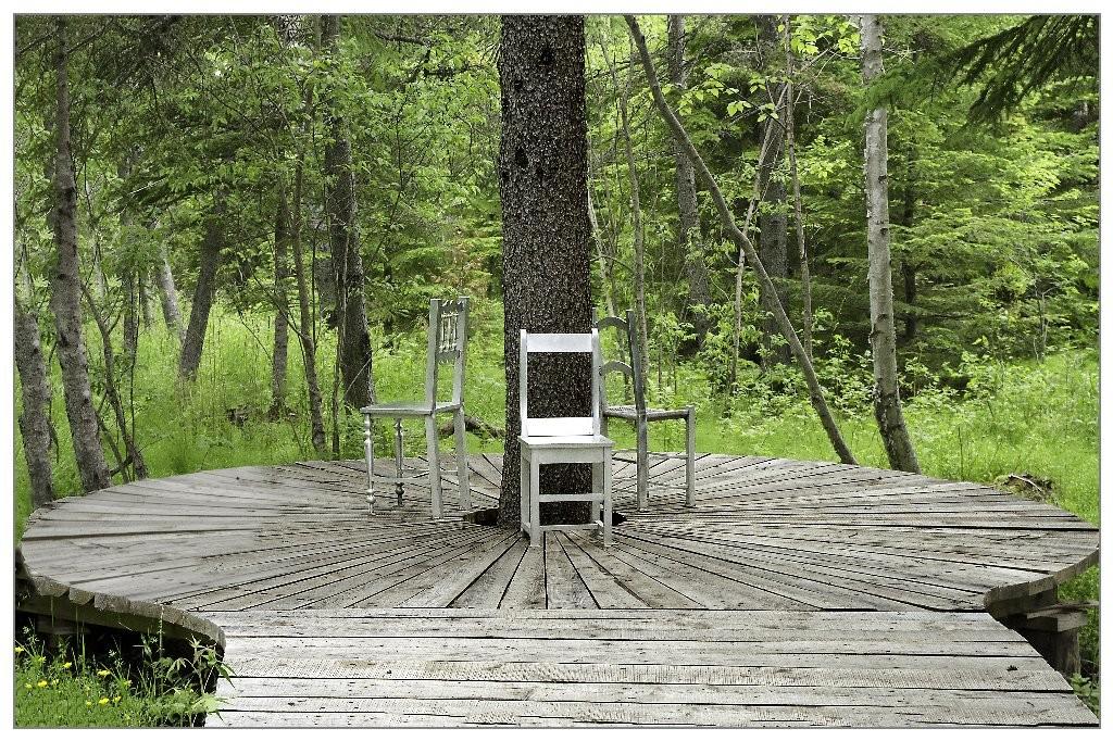 Gilliane : l'arbre aux chaises
