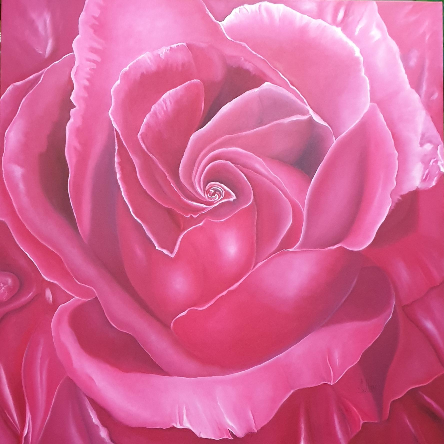 Pink-Rose-Rosenbild-100x100cm-Rheingau-Oelmalerei-MarionHaas-