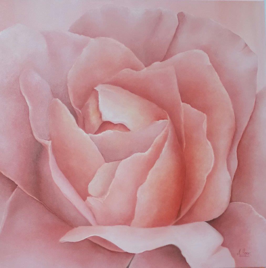 Rose rosa, 0,80 m x 0,80 m, Ölfarbe auf Leinwand