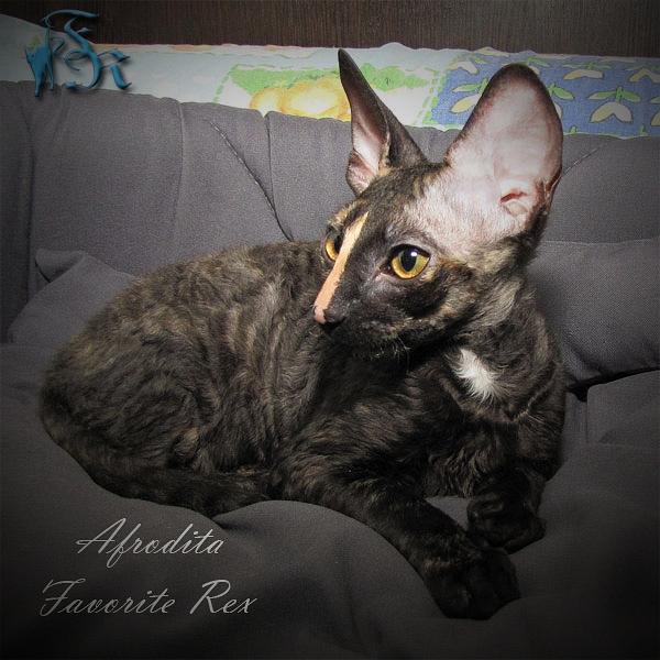 female, 4 months