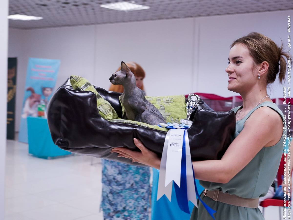 Попова М. и ее кошечка породы канадский сфинкс в своем новом диванчике!