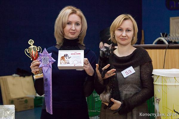 Cattus de Lux Rahael, 8 place WCF-ring adult (exp. I.Guseva)