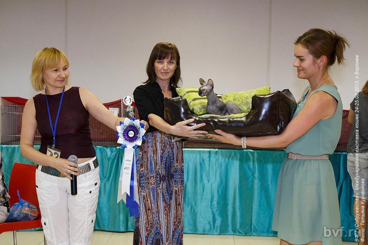 Специальный приз от питомника Fate Rex Поповой М. и ее кошечке породы канадский сфинкс