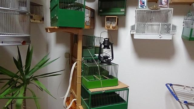 Kraxn für`n Vogelhändler