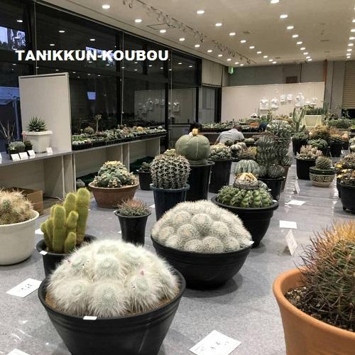京都府立植物園で開催されている「サボテン展」の展示品の数々。丹精込めて作りあげられた、サボテンや多肉植物が並びます。