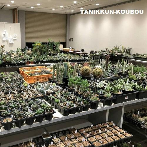 即売コーナーには、クラブ員たちが持ち寄ったサボテンや多肉植物が並びます。