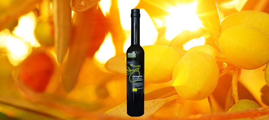 Das mittelfruchtige Cenzino von Azienda Agricola Vincenzo Marvulli zählt zu den weltbesten Olivenölen.