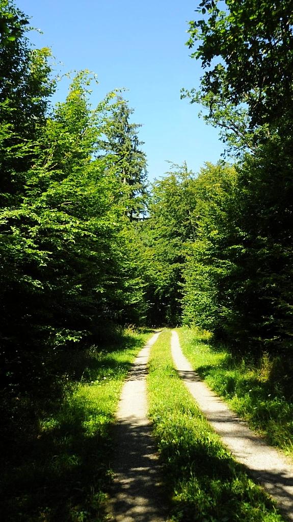 Waldweg im Unterkessacher Wald
