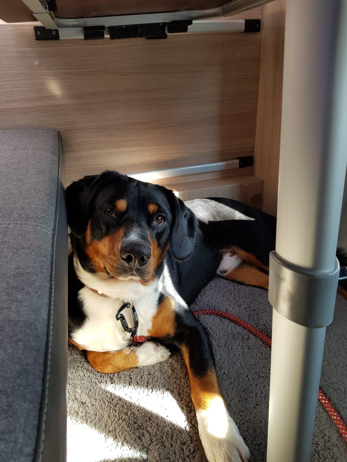 Cody im Wohnmobil auf Reisen